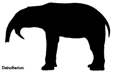 mammals characteristics